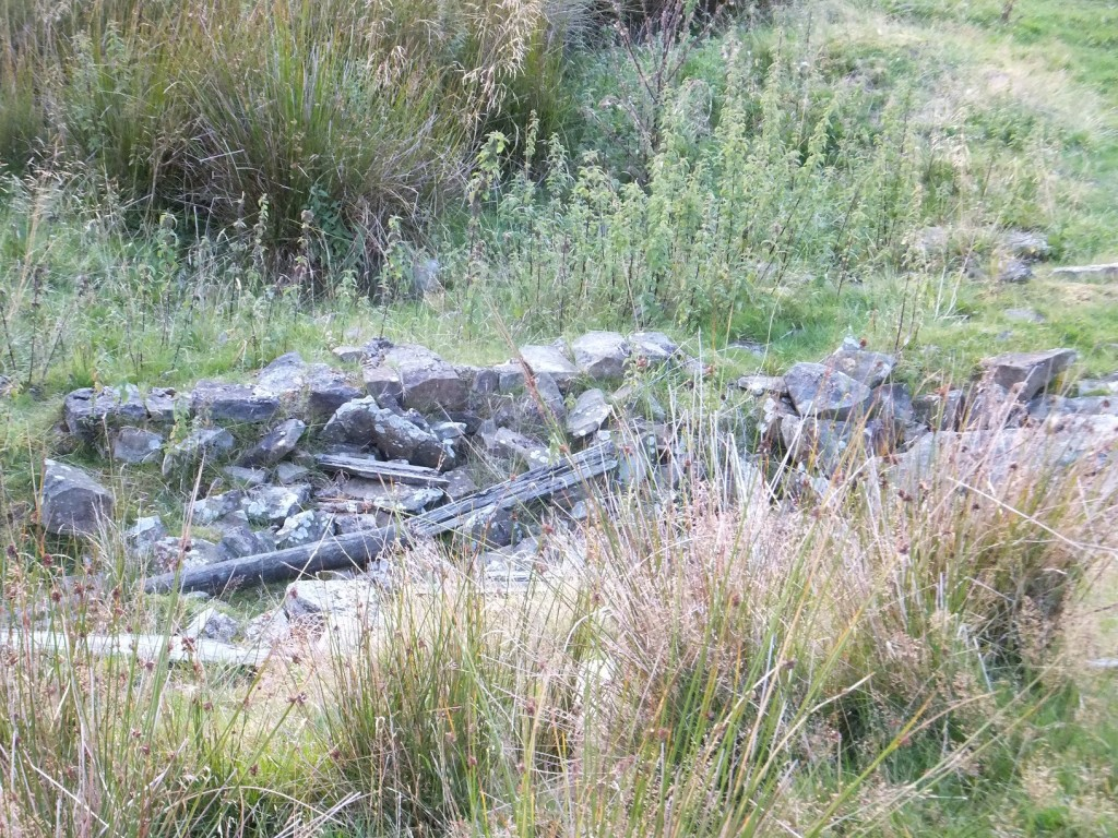 There is still quite a lot of stone present despite much sheep activity.